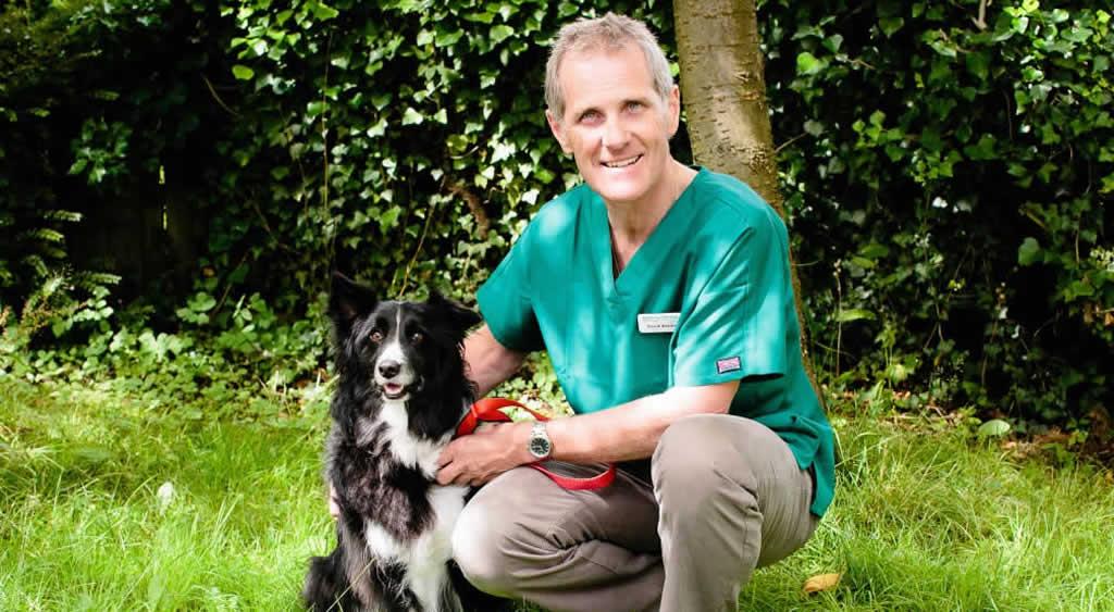 David Bentley and border collie